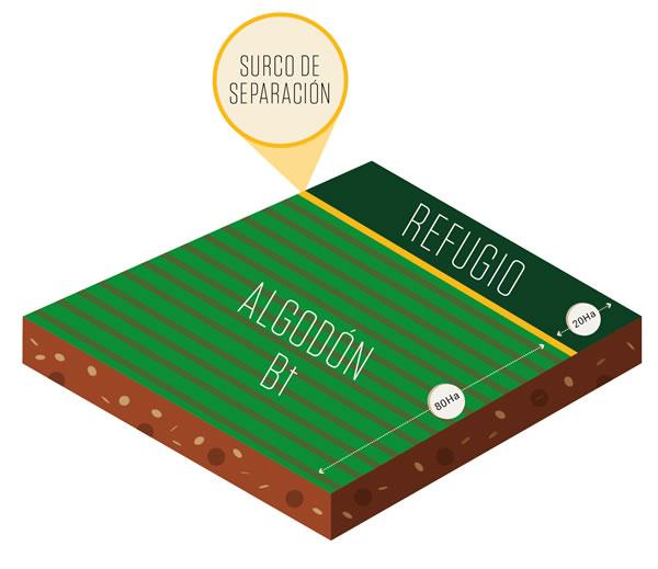 Refugio - cultivo algodón Bt 80/20