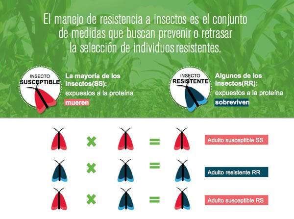 Cómo funciona la resistencia de insectos