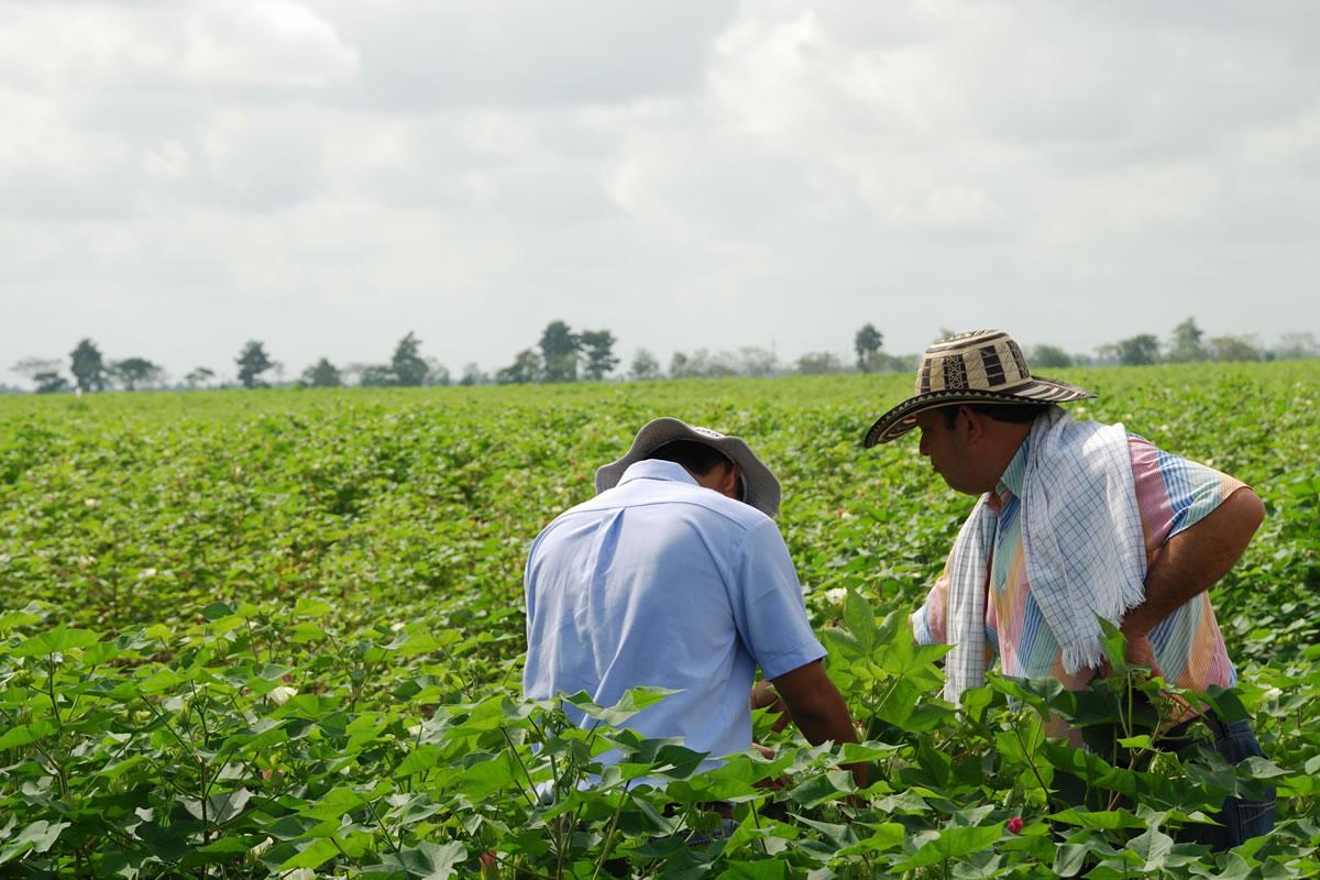 Programa Mari - Agrobio Colombia.
