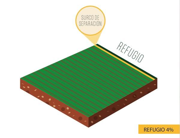 Refugio - cultivo algodón Bt 96/4